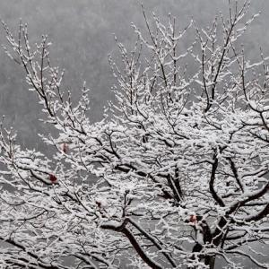 初雪です ・・・
