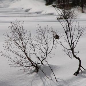 雪景色 ・・・