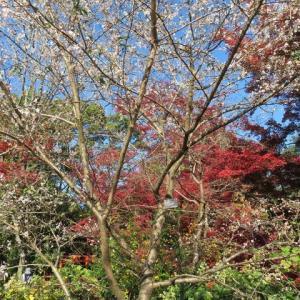 府立植物園~美と幻想的紅葉