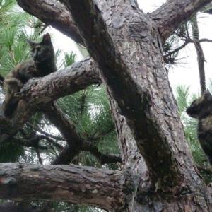 木に止まる猫