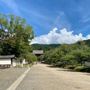 真夏の醍醐寺