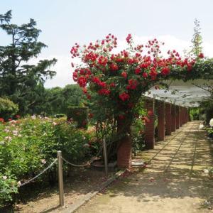 京都府立植物園 花だより№4 6月の花