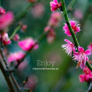 花を楽しむ