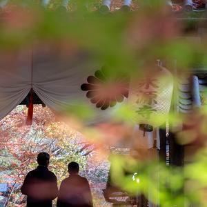 紅葉を楽しむ ~永源寺~
