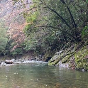 No:24 渓流・・・アマゴを狙って見た。
