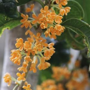 秋 の 花