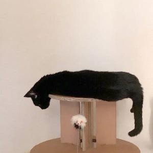 猫展おしらせ『耄耋ってニャンだ!?』