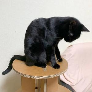 猫猫寺の天井に、、