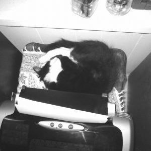猫ログ㉔ ゲンキー記・すだれの紐 2006-8-28