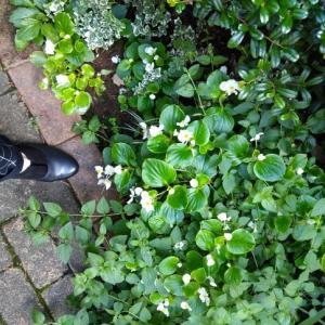 ず~~~と歩いても楽な靴!見つけた。