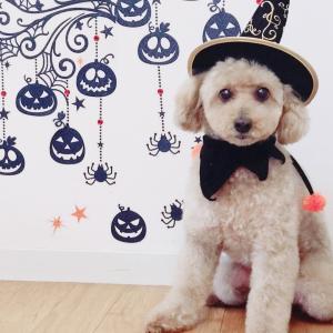 元保護犬 ジャック 今年のハロウィン