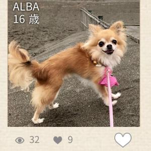 ご長寿犬コンテスト