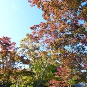 もみぢの錦-1-(昭和記念公園/紅葉)