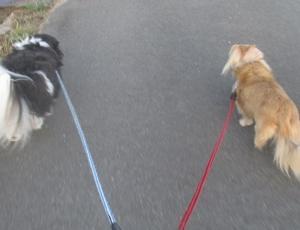 朝の散歩と今日の活動