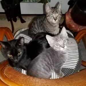 隣の猫、うちの猫