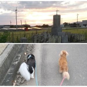 8月29日の朝散歩