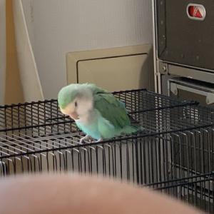 放鳥しても