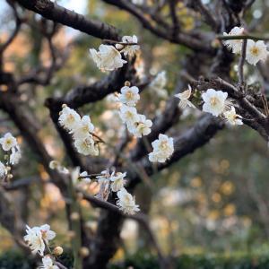 待ち遠しい春の味