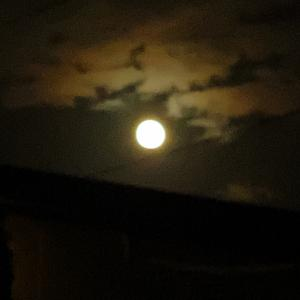 美しい名月