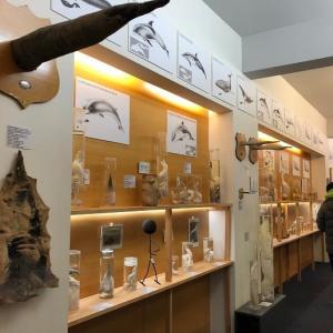 アイスランド・レイキャビック アイスランドペニス博物館(Icelandic Phallological Museum)