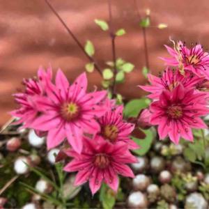 多肉植物とお花たち