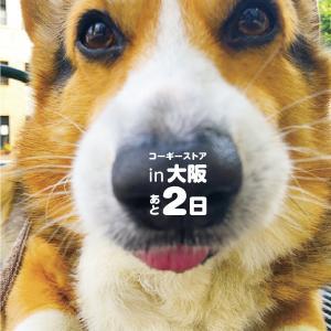コーギーストア実店舗in大阪まであと2日!