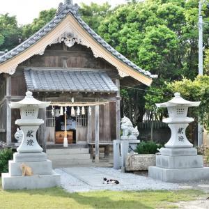 年毛神社(としもじんじゃ)/福岡県 ネコの写真の撮り方