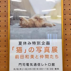 ねこの写真展のお知らせ/福岡県北九州市