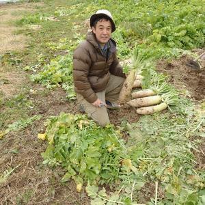 大根の種とり 自然栽培編