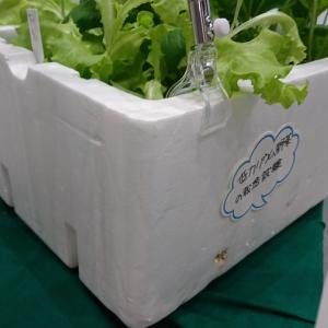 有機栽培で効率的