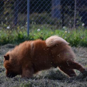 AFFINE&BURILLANE 子犬DAY1~3まで