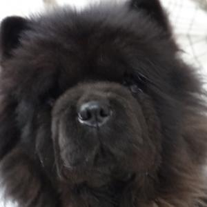 アメリカ輸入犬ペイジとイギリス輸入犬ラスの子たち9歳おめでとう