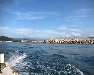 鳥取でシロイカ