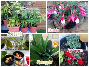 再生植物たち