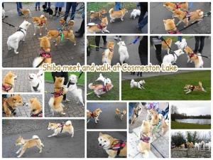 ウェールズ柴犬オフ会 at Cosmeston Lake