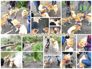 柴犬オフ会 at Abbots Pool