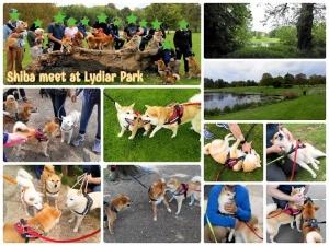 柴犬オフ会 at Lydiar Park