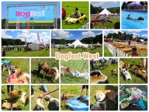Dogfest West 2019