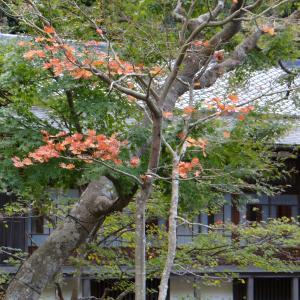 ⑬「令和初の秋の鎌倉!」 北鎌倉の円覚寺!