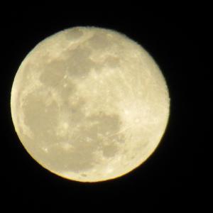 今週の~満月が!!「野良猫いたよ~」