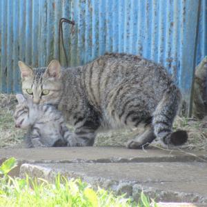 子猫をくわえた親猫が! 鈴木水産で!