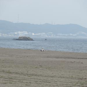 三浦海岸に行ってみたよ!