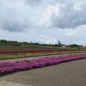 ⑭ 「横須賀のソレイユの丘に行く!」