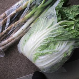 「白菜が安いよ~!!」 野鳥が!