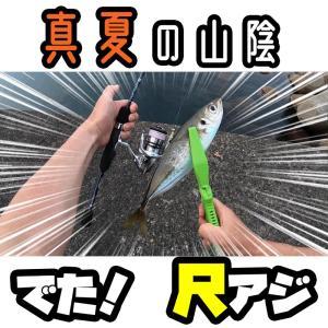 【アジング】真夏の漁港から尺アジを釣る