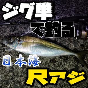 【アジング】早春の山陰日本海:ジグ単で尺アジを釣る