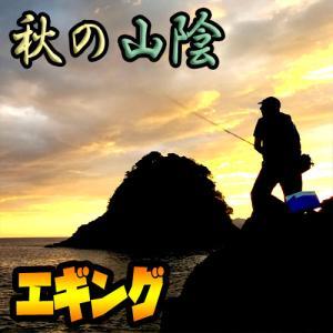 【エギング】新子のアオリイカをランガンで釣る4日間:サイトフィッシングは楽しい~