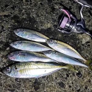 秋の漁港アジングで久しぶりの釣果