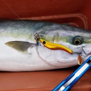 メタルマル60でSLJ?平政にマルゴに真鯛に根魚