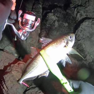 ジグ単で真冬の尺アジ釣行